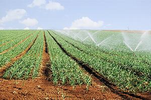 טפטפות לחקלאות
